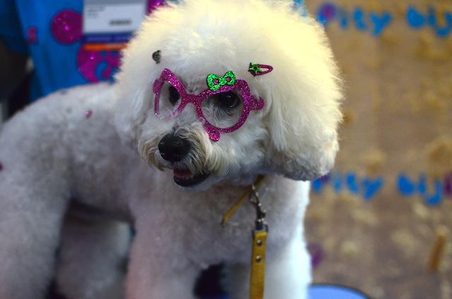 A poodle Pity é a mascote da marca. (Foto: Karina Sakita)