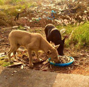 Homem-alimenta-80-cães-abandonados-todos-os-dias-na-Tailândia-há-cinco-anos-pdd3