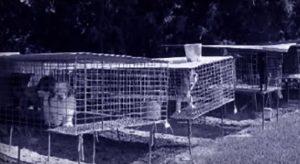 """A maioria das """"Fábricas de filhotes"""" oferecem péssimas condições de vida para os animais. (Foto: Reprodução / Youtube HSUS)"""