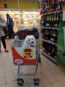Os cães se adaptaram muito bem aos carrinhos e parecem gostar do passeio pelos corredores do mercadinho. (Foto: Reprodução / Lucia Landoni)