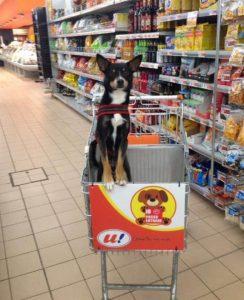 Os clientes adoraram a novidade e parece que os cães também! (Foto: Reprodução / Lucia Landoni)