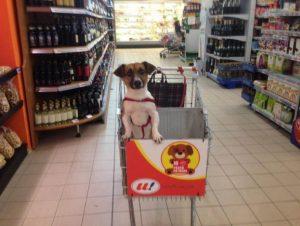 Os cães ficam separados dos mantimentos e em um espaço confortável. (Foto: Reprodução / Lucia Landoni)