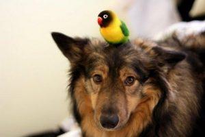 Os animais se deram muito bem desde o primeiro encontro. (Foto: Reprodução / Melissa Gill)