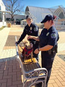 As policiais tiram seu horário de almoço para passear com os cães do abrigo. (Foto: Reprodução / Amy Thomas)
