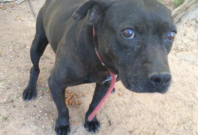 Todo cão precisa de cuidados básicos como água, comida, tratamento veterinário e carinho. (Foto; Reprodução / The Dodo)