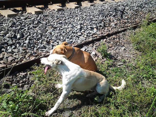 Os cães ficaram juntos até que alguém viesse realizar o resgate. (Foto: Reprodução / Facebook / SPCA Durban)