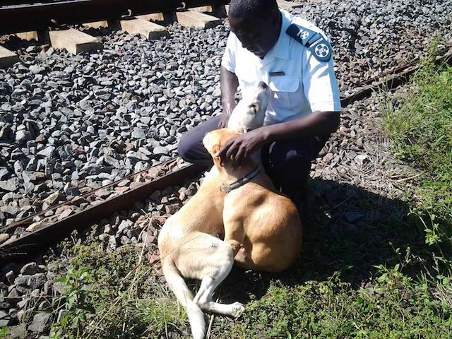 Inspetor da SPCA com os cães. (Foto: Reprodução / Facebook / SPCA Durban)