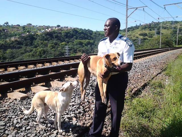 O cão Hero não saiu de perto da amiga nem um segundo. (Foto: Reprodução / Facebook / SPCA Durban)