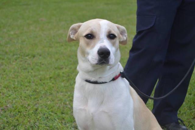 Hero foi adotado e já está morando em seu novo lar. (Foto: Reprodução / Facebook / SPCA Durban)