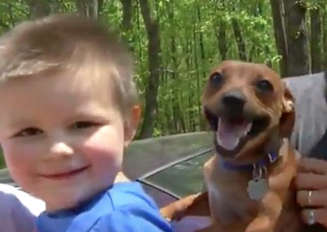 O cão Banjo ficou o tempo todo ao lado do menino. (Foto: Reprodução / Youtube / VIP 007 / 10 WSUS)