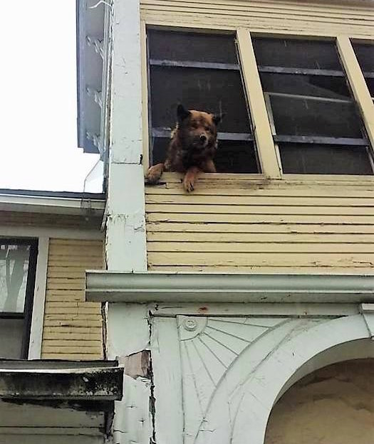 O cão ficou 3 semanas sozinho nesta casa. (Foto: Reprodução / The Dodo)