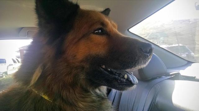 O cão ficou alegre por ter recebido ajuda. (Foto: Reprodução / The Dodo)