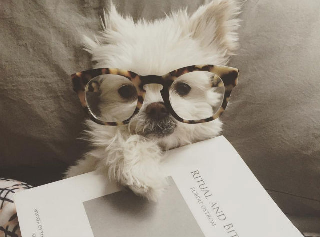 acc064630c0ad A visão canina sofre mudanças com o passar dos anos. (Foto  Reprodução