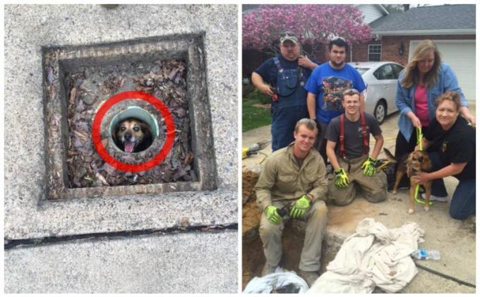 O cão caiu no bueiro e acabou ficando preso. (Foto: Reprodução / Bark Post)