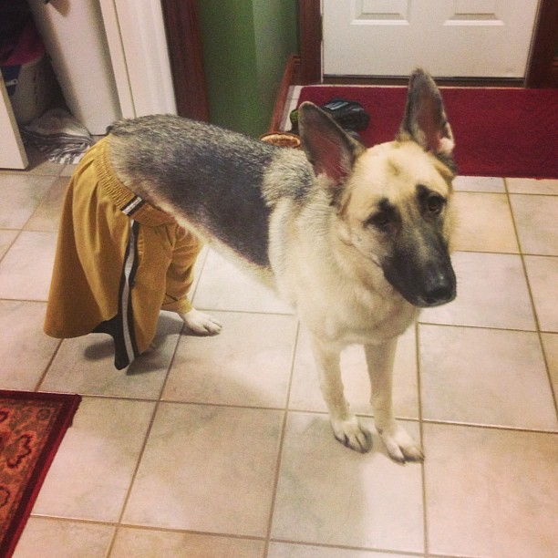 cachorro-shorts-05