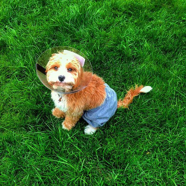 cachorro-shorts-08