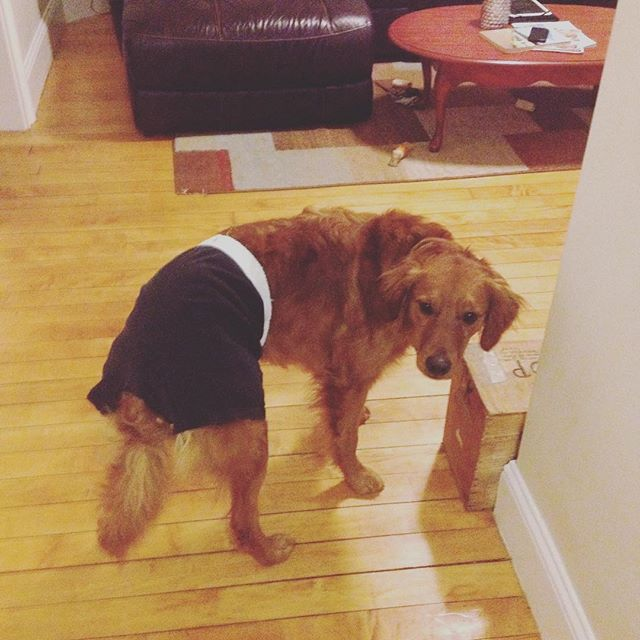 cachorro-shorts-10