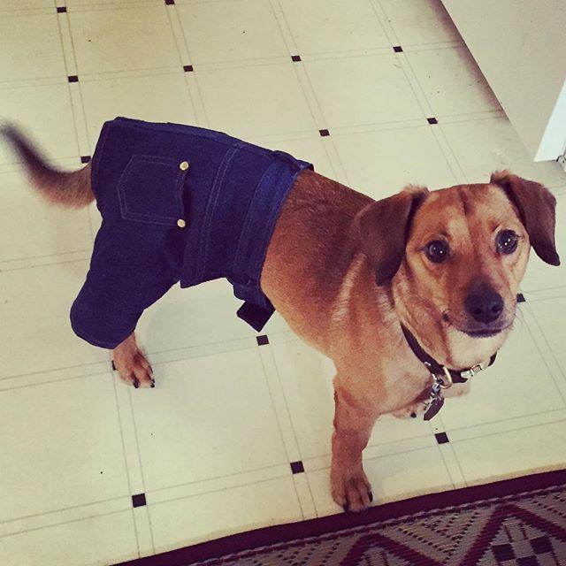 cachorro-shorts-11