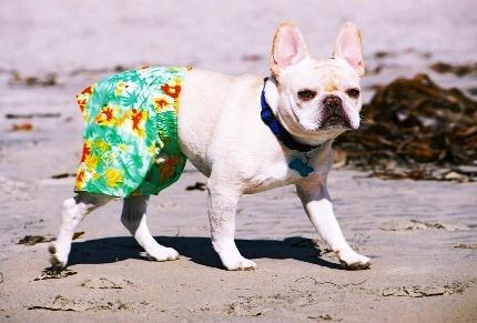 cachorro-shorts-14