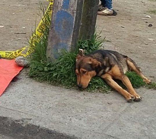 O cão ficou perto de seu tutor até o último momento. (Foto: Reprodução / Twitter / esteban_1181)