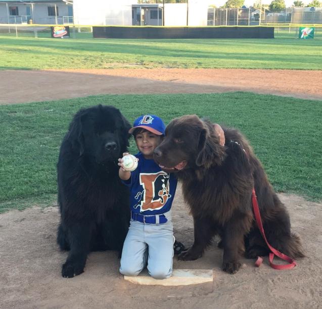No jogo de baseball. (Foto: Reprodução / Instagram / ralphie_the_newf_and_the_boss)