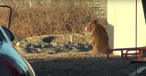 O cão tinha medo dos humanos. (Foto: Reprodução / Bark Post)