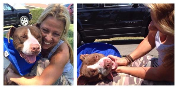 O pit bull está tendo a vida que todo cachorro merece. (Foto: Reprodução / Bark Post)