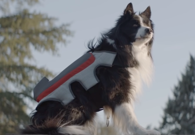 Cachorro usando o Posting Tail. (Foto: Reprodução / Youtube / Saatchi & Saatchi Madrid)