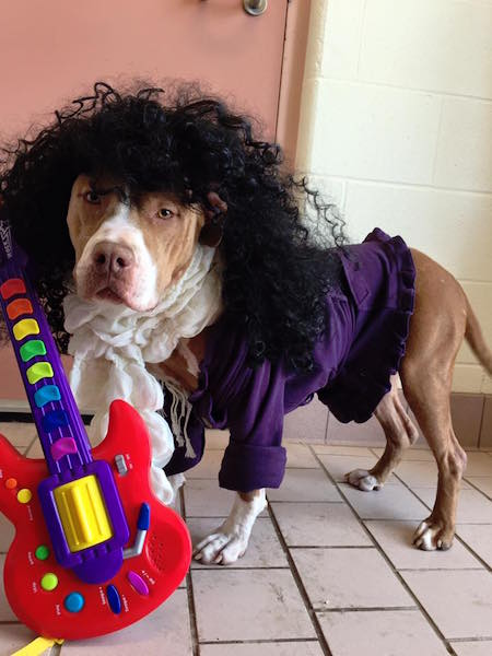 A cachorra Lady Bug no estilo rock'n'roll. (Foto: Reprodução / Facebook / Cuyahoga County Animal Shelter)