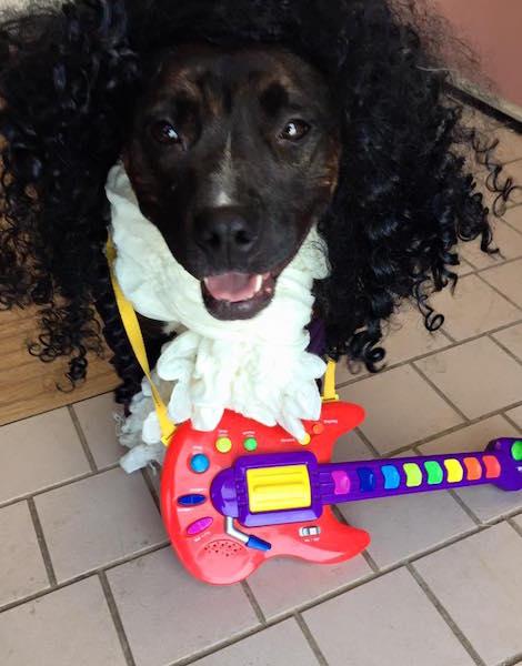 Lisa prestando uma homenagem a Prince. (Foto: Reprodução / Facebook / Cuyahoga County Animal Shelter)