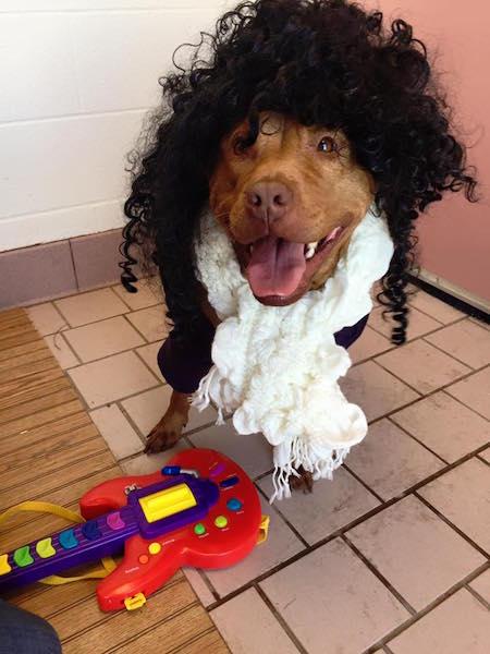 Rosetta parece ter se divertido com a brincadeira. (Foto: Reprodução / Facebook / Cuyahoga County Animal Shelter)