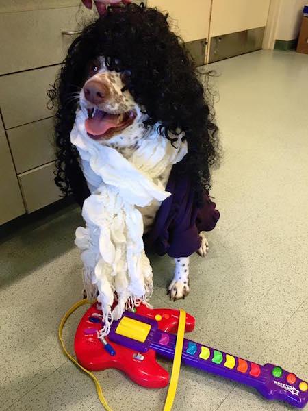 Nesquick esperando pela adoção. (Foto: Reprodução / Facebook / Cuyahoga County Animal Shelter)
