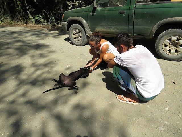 A cachorra parecia não ter mais esperanças de ser resgatada. (Foto: Reprodução / Facebook / Charlie's Angels - Animal Rescue)