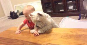 O bebê traz o frango para mais perto do irmãozinho de quatro patas. (Foto: Reprodução / Rumble)
