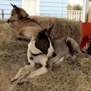 Após serem de fato adotados, os cães logo se sentiram em casa e parte da família. (Foto: Reprodução / Instagram thelmaandlouisedogdays)