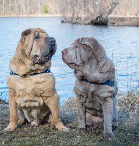 Os cães viviam em criadouros diferentes, mas ambos em péssimas condições. (Foto: Reprodução / Instagram Remypei)