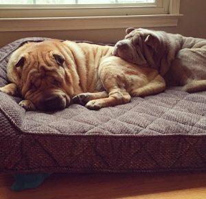 Até que os cães se conheceram após serem adotados. (Foto: Reprodução / Instagram Remypei)