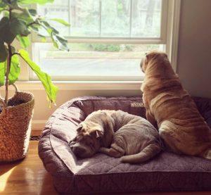 Remy não estava muito entusiasmado com a nova amiga no início. Mas ele logo se entregou aos carinhos de Tillie. (Foto: Reprodução / Instagram Remypei)