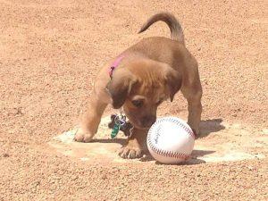 Hoje, Daisy vai todos os dias para o estádio e se tornou mascote do time. (Foto: Reprodução / Savannah Bananas)