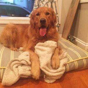 Ele adora ficar com o seu cobertor. (Foto: Reprodução / Caroline Tillman)