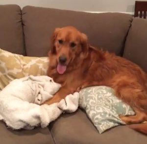 Até para o sofá fica mais gostoso com o seu cobertor preferido. (Foto: Reprodução / Instagram Gus The Golden)