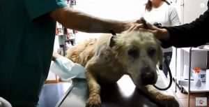 O cão estava bastante doente e bastante traumatizado. (Foto: Reprodução / Youtube / Orphanpet GR)