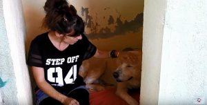 O cão está recuperando sua saúde e a confiança nos humanos. (Foto: Reprodução / Youtube / Orphanpet GR)