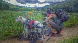Com a cadeira de rodas Mel passou a acompanhar seu tutor em viagens por todo o país. (Foto: Reprodução / Thomas Dilworth)