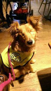 Hoje, Nym é um cão de terapia e ajuda várias pessoas. (Foto: Reprodução / Sian Porter)