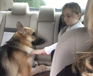 Haus e Molly logo se tornaram melhores amigos e o cão se encantou pela menina. (Foto: Reprodução / Gofoundme / Save Haus)