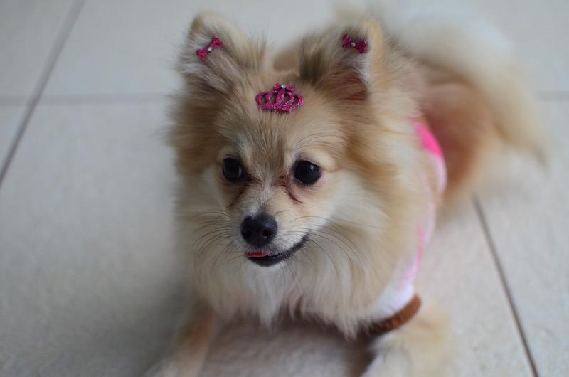 Lola usando o Conjunto Coroa Real do Kit Realeza. (Foto: Karina Sakita)