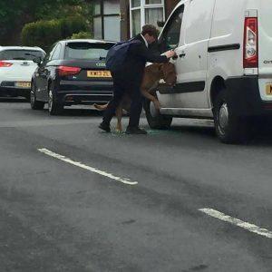 O menino libertou o cão da coleira que o deixou pendurado e esperou junto dele até que seu tutor voltasse.