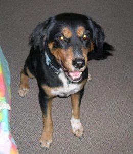 Carli é uma cadelinha idosa, de 13 anos de idade. (Foto: Reprodução / Sara Melnicoff)