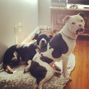 Apollo se deu muito bem com os cães de sua nova mamãe. (Foto: Reprodução / Brittany Faske)
